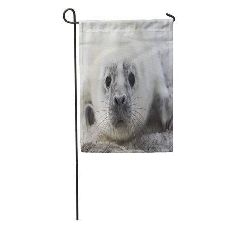 Estonian Garden - LADDKE Quickly Melting Ice Brings Gray Seal Pups to Estonian Garden Flag Decorative Flag House Banner 12x18 inch