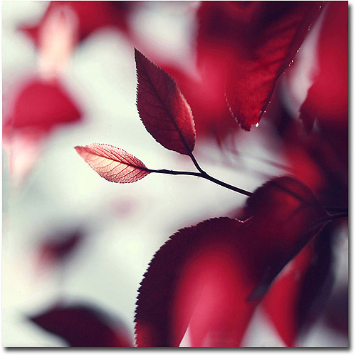Trademark Fine Art Young 'When Spring is Red' Canvas Art by Beata Czyzowska