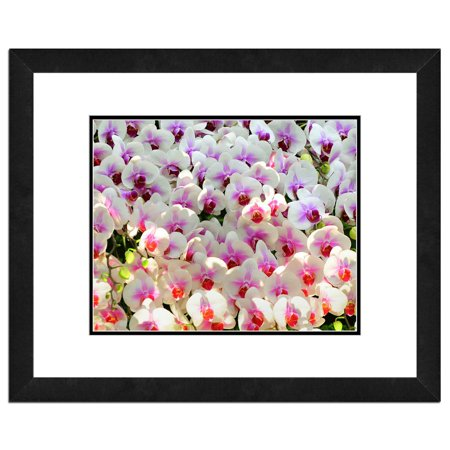 - Orchids, Flowers Framed Photo by Photo File