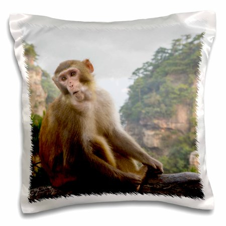 3dRose Rhesus macaque monkey in the Hallelujah Mountains, Wulingyuan, China - Pillow Case, 16 by 16-inch - Monkey Chinese