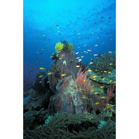- Coral Reef Papua New Guinea Pacific Ocean Poster Print by VWPicsStocktrek Images