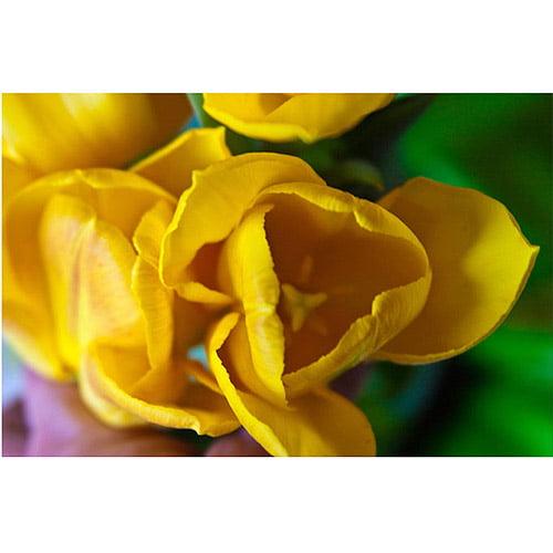 "Trademark Fine Art ""Open Tulip"" Canvas Art by Martha Guerra, 16x24"
