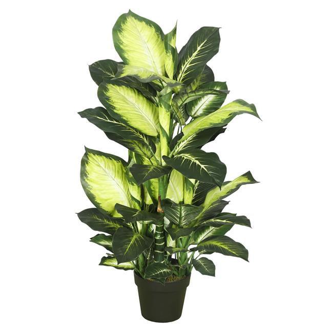 Dieffenbachia Everyday Tree with Pot-Green White - 40 in.