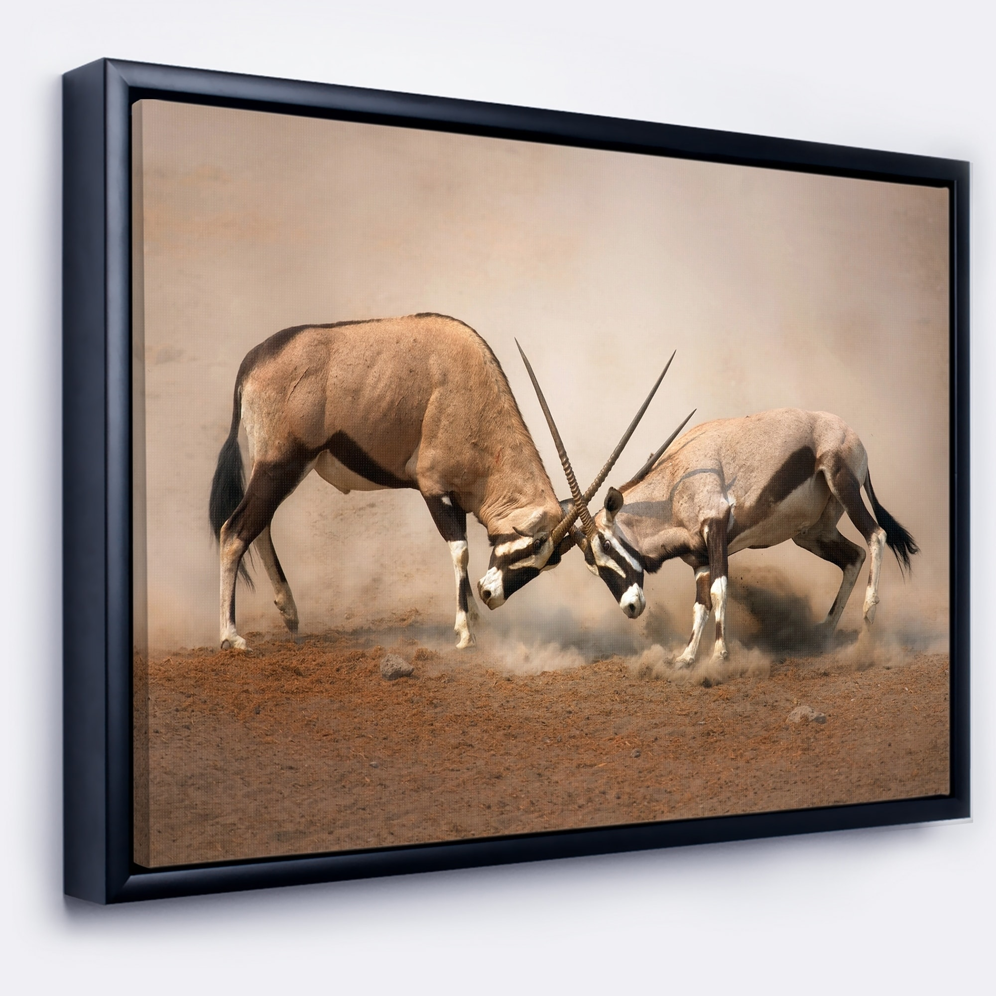 DESIGN ART Designart 'Gemsbok Antelopes Fighting' African