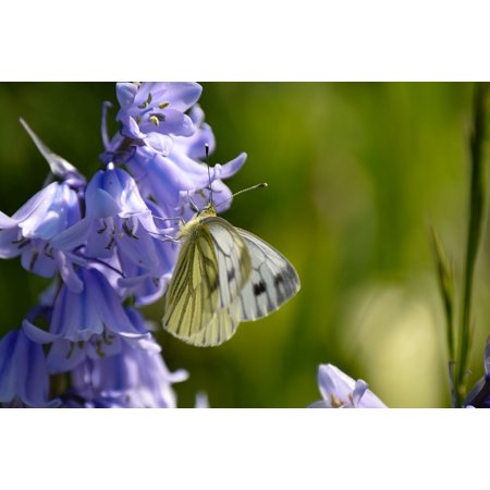 LAMINATED POSTER Purple Spring Flowers Butterfly Garden Poster Print 24 x 36