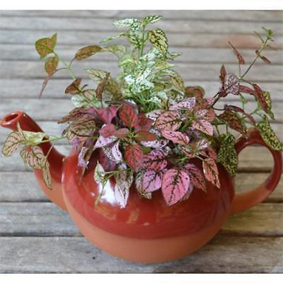 CS/3 - Red Glazed Extra Large Teapot Planter](Teapot Planter)