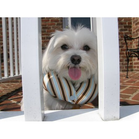 Puppy Bumpers - Keeps Your Tiny Dog From Squeezing Thru Small Spaces - Blue Stripe Small