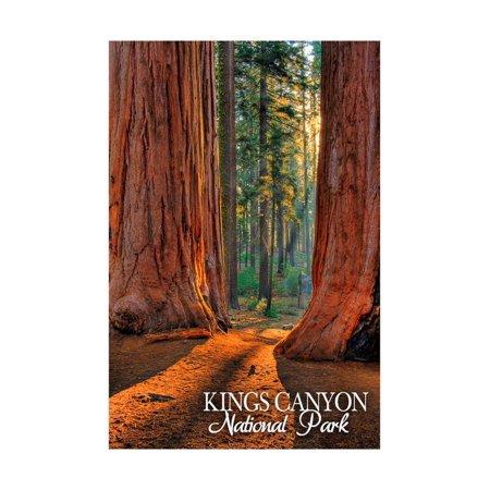 Grants Grove - Kings Canyon National Park, California Print Wall Art By Lantern Press
