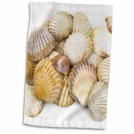 3dRose Sea Shells by the Sea Shore - Summer - Beach Theme - Towel, 15 by 22-inch