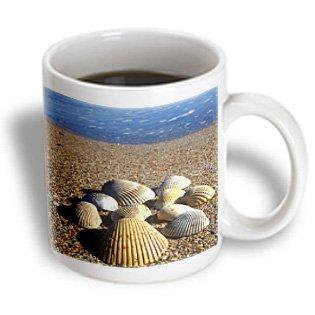 3dRose Seashells, Jacksonville, St. Johns River, Florida - US10 GJO0234 - Greg Johnston, Ceramic Mug, 15-ounce