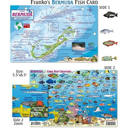 - Bermuda Fish ID for Scuba Divers and Snorkelers, Detailed images and name identification By Franko Maps