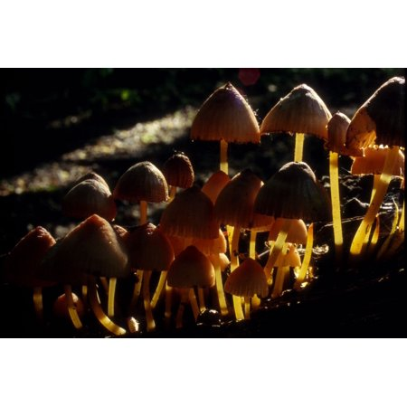 Canvas Print Poison Nature Darck Forrest Mushroom Stretched Canvas 10 x 14