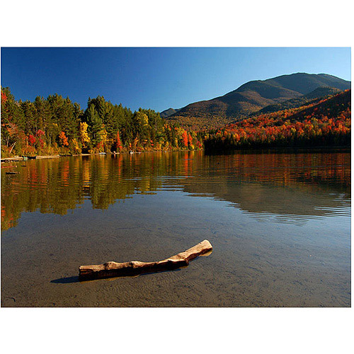 "Trademark Art ""The Adirondack Driftwood"" Canvas Wall Art by Nicole Dietz"