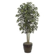 Autograph Foliages W-60271 - 7 Foot Black Olive Tree - Green