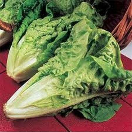 Lettuce Parris Island Romaine Great Heirloom Vegetable 1,500 Seeds