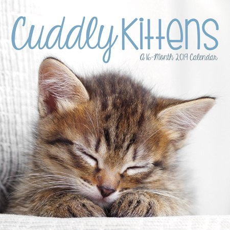 - 2019 Cuddly Kittens Mini Calendar