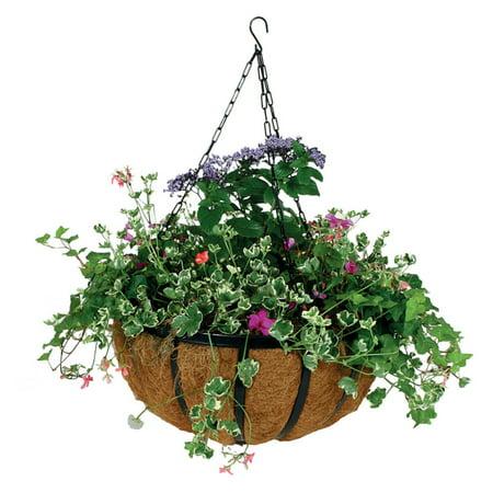 Gardman 14 in. Forge Hanging - Gardman Plastic Hanging Basket