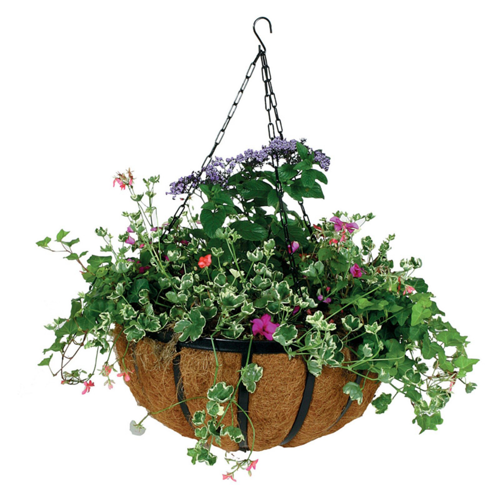 Gardman 14 in. Forge Hanging Basket