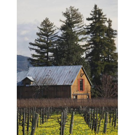 Vineyard in Winter, Rutherford, Napa Valley Wine Country, Northern California, Usa Print Wall Art By Walter Bibikow - Napa Halloween City