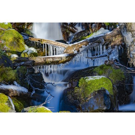 Collection of ice on a fallen log over a little waterfall in the Olympic Peninsula rain forest Washington United States of America Poster Print by Doug Ogden  Design