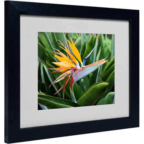 "Trademark Fine Art ""Bird of Paradise"" Matted Framed Art by Pierre Leclerc"