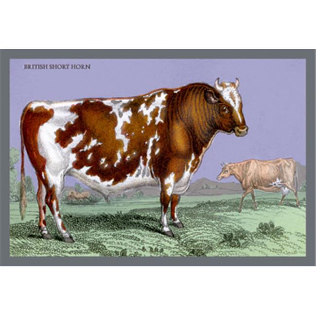 Buy Enlarge 0-587-05821-8P12x18 British Short Horn- Paper Size P12x18