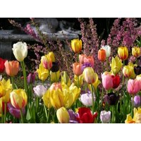Canvas Print Garden Colorful Tulips Flowers Spring Bulbs Stretched Canvas 10 x 14