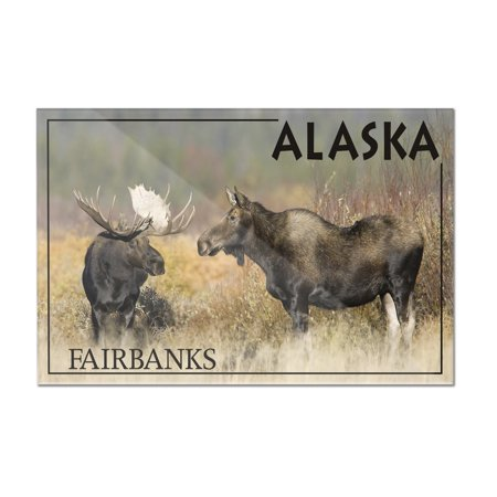 Moose Male & Female - Fairbanks, Alaska - Lantern Press Photography (James T. Jones) (12x8 Acrylic Wall Art Gallery Quality) ()