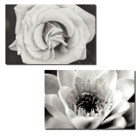 Gorgeous Classic Black and White Rose and Lotus; Two 10X8 Poster Prints (American Classic Rose)