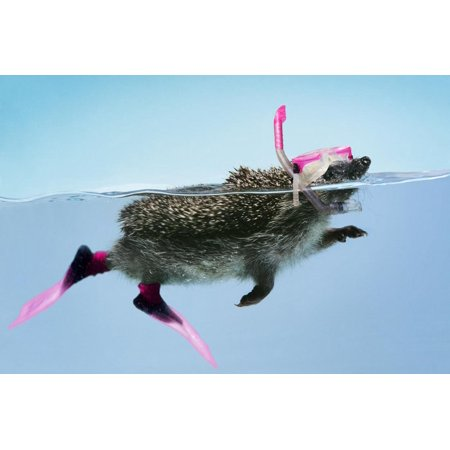 Hedgehog Swimming in Mask Snorkel and Flippers Print Wall Art ()