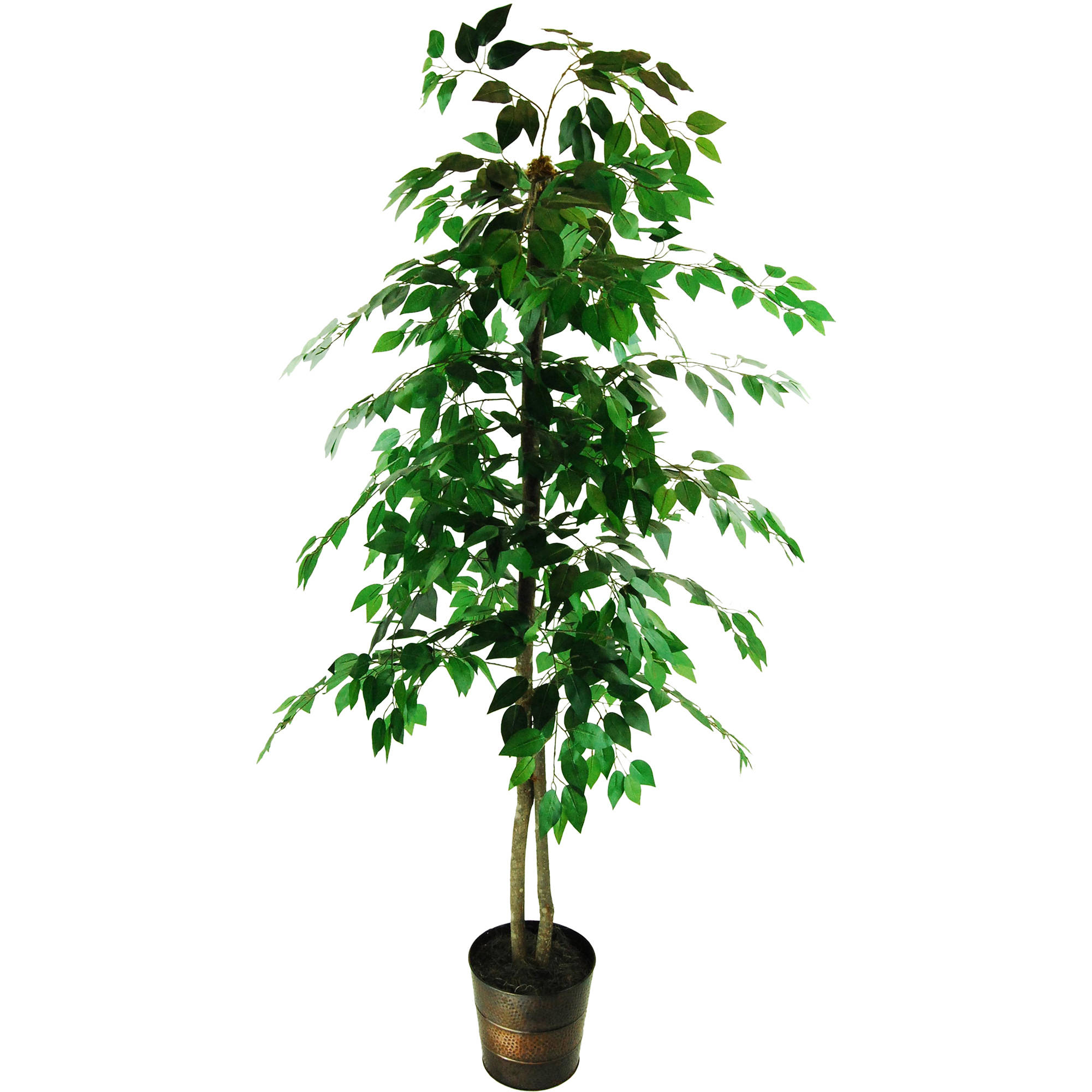 Ficus Tree in an Embossed Metal Container