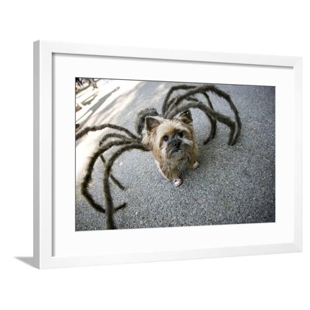 Usa, New York. Pet Halloween Contest at Thompkins Square Park Framed Print Wall Art By Julien McRoberts (Halloween Theme Park Names)