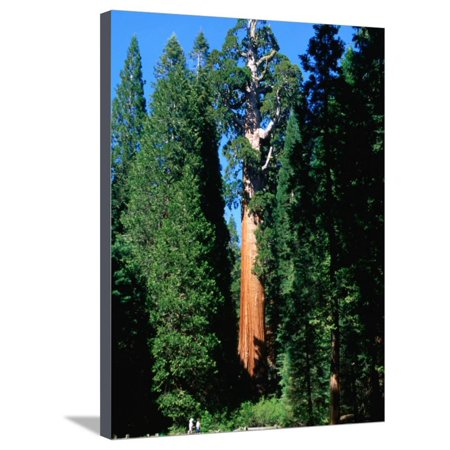 Party City In Elk Grove (General Grant Tree in Grant Grove, Kings Canyon National Park, USA Stretched Canvas Print Wall Art By John Elk)