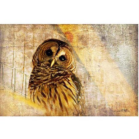 "Trademark Fine Art ""Barred Owl"" Canvas Art by Lois Bryan"
