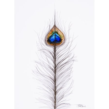 Watercolor Painting Of Two Peacock Feathers Canvas Art - Tara Thelen Design Pics (26 x 36)