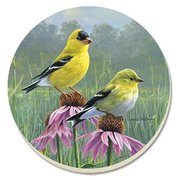 Beautiful Songbirds Goldfinches Coasters Set of 4