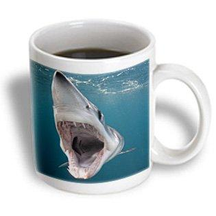 3dRose Shortfin Mako Shark with open mouth, Isurus oxyrinchus, San Diego, California, USA, Eastern Pacific, Ceramic Mug, 11-ounce