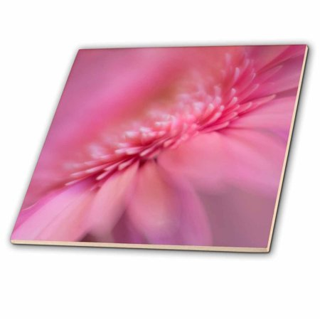 3dRose USA, Maine, Harpswell. Pink gerbera daisy abstract. - Ceramic Tile, 4-inch