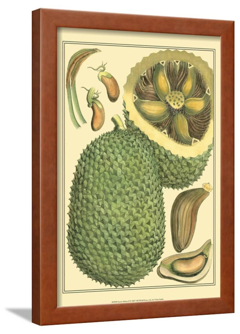 Exotic Melons II Framed Print Wall Art By Vision Studio - Walmart.com