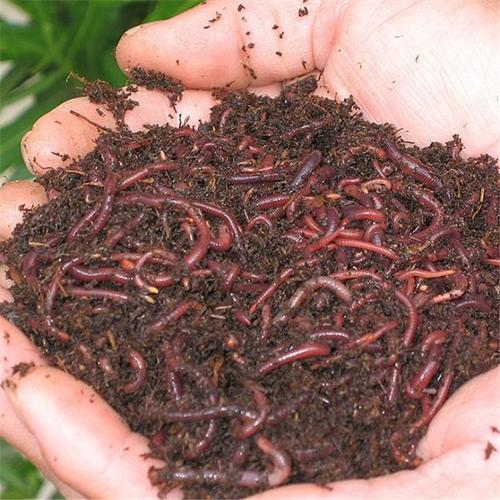 Orcon EW-C5LB Earthworms - Five pound -Help Keep The Soil Loose