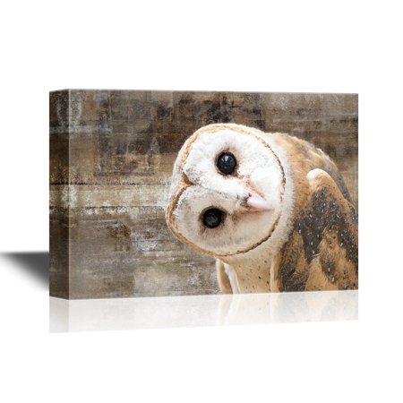 wall26 Canvas Wall Art - Common Barn Owl (Tyto Albahead) Head Close Up - Gallery Wrap Modern Home Decor | Ready to Hang - 32x48 inches