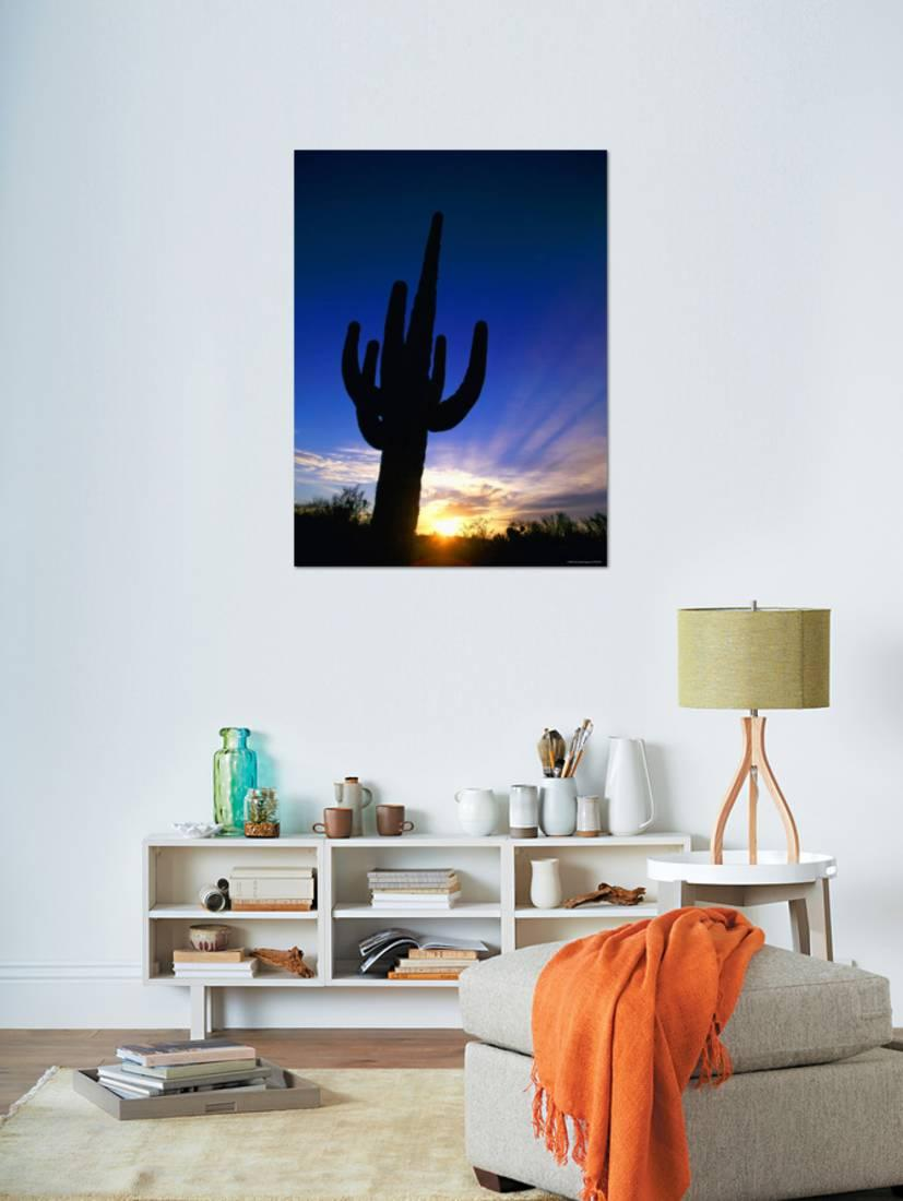 Saguaro National Park, Cactus, Sunset, Arizona, USA Photographic Print By  Steve Vidler   Walmart.com