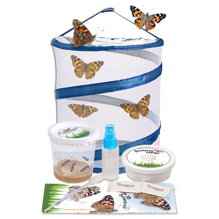 LIVE Butterfly Kit: Pop up Cage, FREE Certificate for 5 LIVE Caterpillars & More (Cat5e Installation Kit)