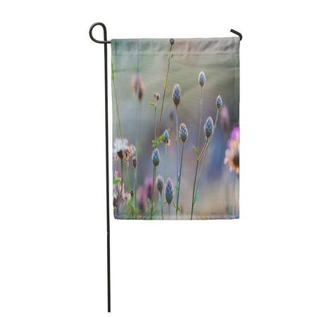 JSDART Purple Wild Thistle Flowers Colorful Summer Meadow Garden Flag Decorative Flag House Banner 12x18 inch - image 1 de 1