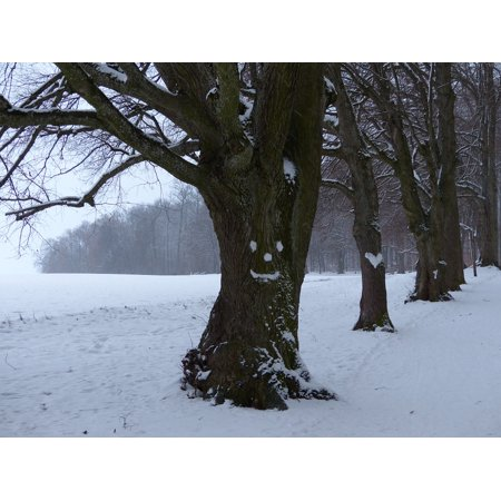 Canvas Print Heart Snowy Forest Spirit Snow Avenue Tree Face Stretched Canvas 10 x 14