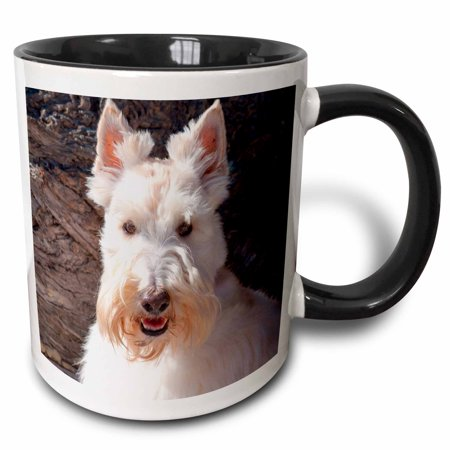 3dRose White Scottish Terrier portrait against wood - Two Tone Black Mug, 11-ounce