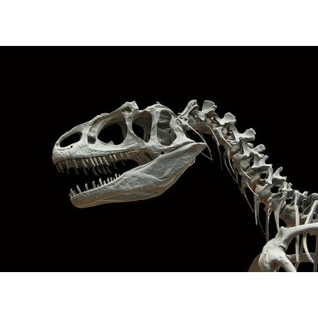 10' Comfort System - Canvas Print Bone Allosaurus Skeleton Dinosaur Prehistoric Times Stretched Canvas 10 x 14