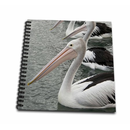 3dRose Australia, Albany, Oyster Harbor. Australian pelican. - Mini Notepad, 4 by 4-inch