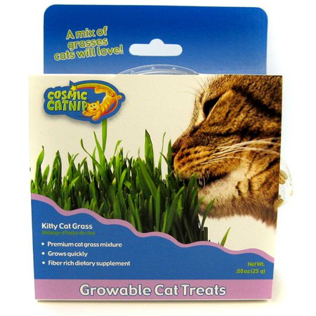 Kittycat Grass 49 Gram Tub