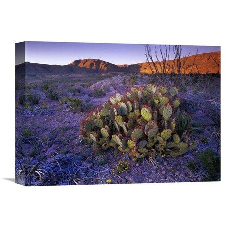 Landscape Lighting Gallery (Global Gallery Opuntia in Chihuahuan Desert Landscape Big Bend National Park Texas Wall Art )